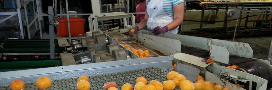 Élelmiszer és Ital