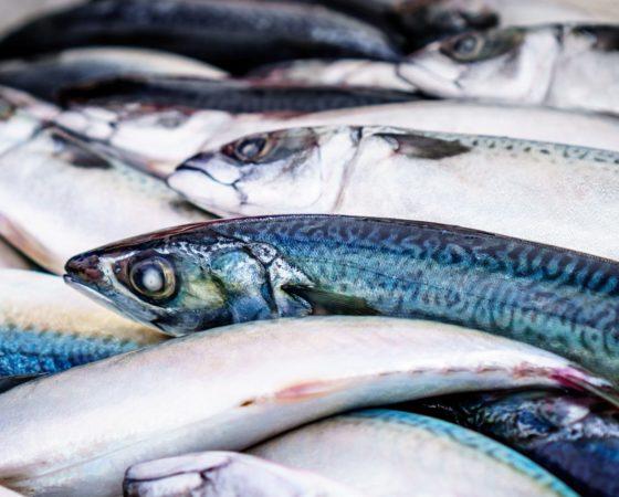 Halászati ipar
